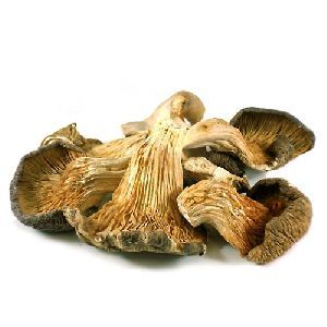 Dried Whole Oyster Mushroom
