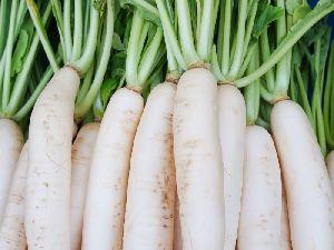 Fresh Natural Radish