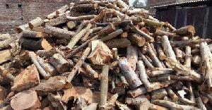 Safeda Firewood