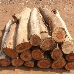 Timber Wood Logs