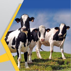 Burgofat Animal Feed Supplement