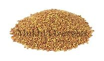 Alfalfa Grass Seeds