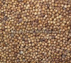 Sortex Coriander Seeds