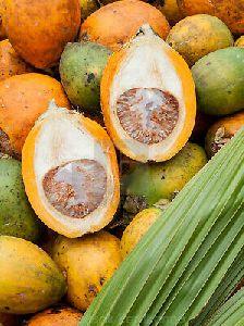 Fresh Arecanut