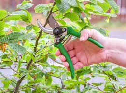Green Plant Maintenance Services