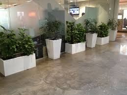 Plants Rental Services