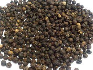 Hybrid Black Pepper Seeds
