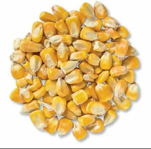 Organic Yellow Maize