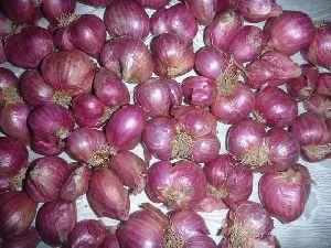 Podisu Onion