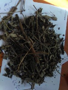 Dried Nirgundi Leaves