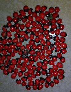 Gunja Seeds