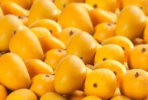 Natural Hapus Mango