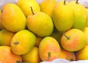 Organic Hapus Mango