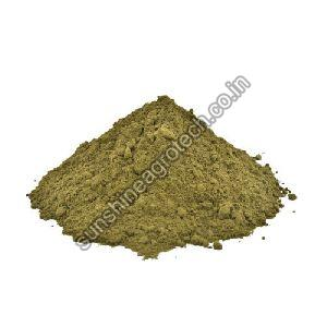 Dried Sonamukhi Powder