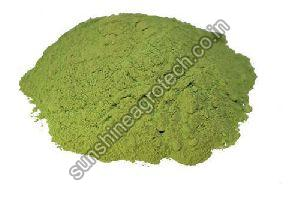Dried Stevia Leaves Powder
