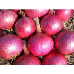 20-40 MM Fresh Red Onion