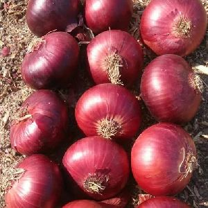 40-60 MM Fresh Red Onion