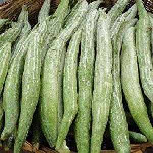 F1 Hybrid Snake Gourd Seeds