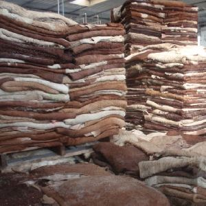 Traditional Salted Raw Hides