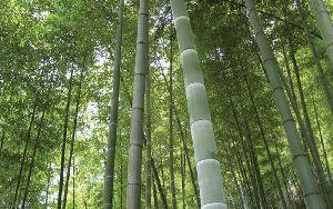 Roadside Timber Plants