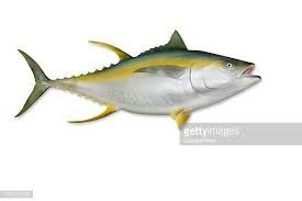 Yellowfin Tuna Fish