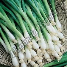 Fresh Green Onion