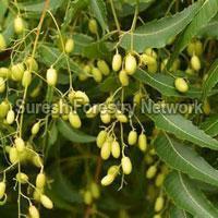 Biofuel Seeds