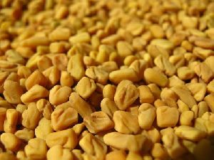 Raw Fenugreek Seeds