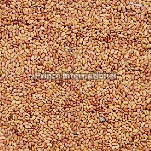 Alfalfa Herbal Seeds