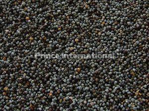 Nepali Shatavari Herbal Seeds
