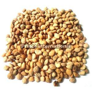 Safed Musli Herbal Seeds