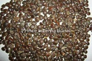 Shekhawati Babul Herbal Seeds