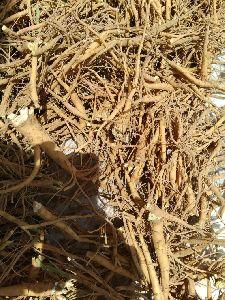 Somlata Roots