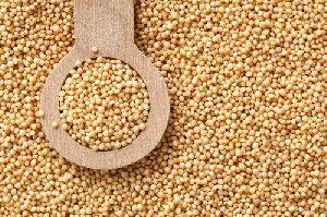 Ramdana Seeds