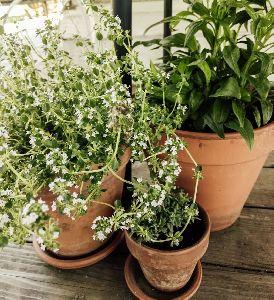 Bio Topiary Plants