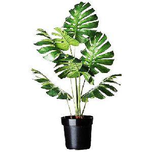 Evergeen Indoor Plants