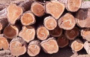 Cherry Wood Logs