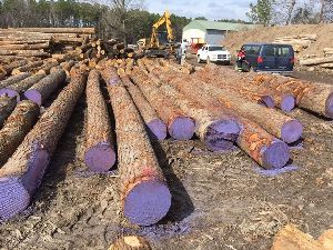 Hickory Wood Logs