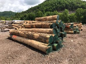 White Ash Wood Logs