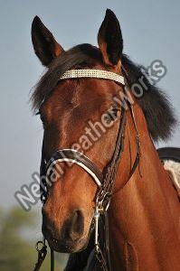 English Bridle Reins