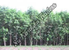 Subabul Wood