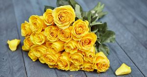 Fresh Yellow Rose Flower