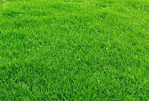 Green Landscape Grass