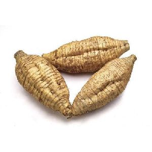Fresh Arrowroot