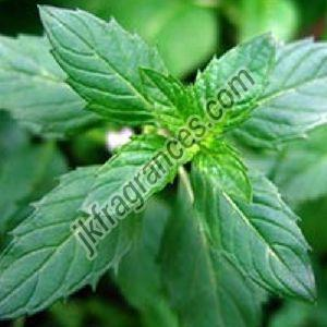 Natural Menthol Oil