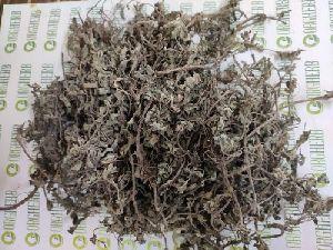 Bhringraj Herb