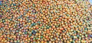 Arecanut Seeds
