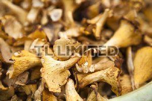 Brown Dry Oyster Mushroom