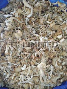Red Dry Oyster Mushroom