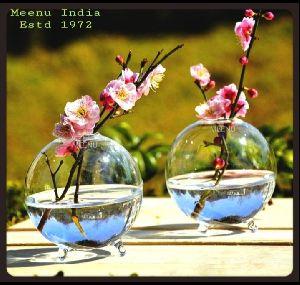 Borosilicate Glass Rose Money Plant Table Top Planter